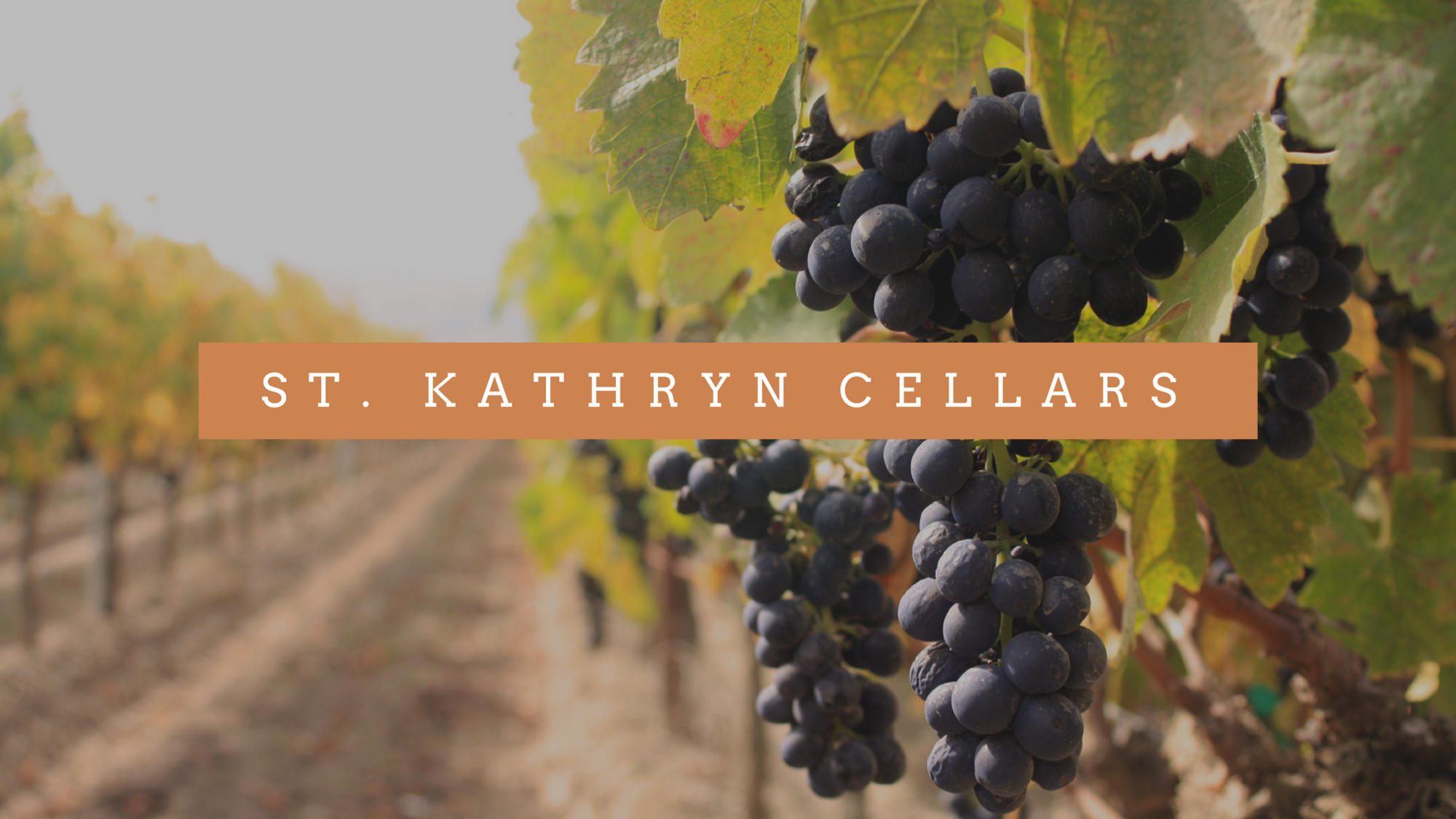 St Kathryn Cellars